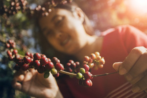 asian woman smiling face happiness emotion near raw coffee seed on tree branch