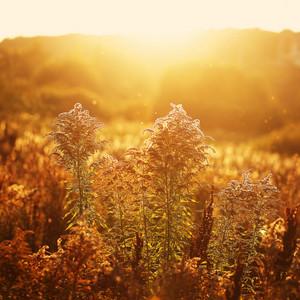 autumn golden field background. Outdoor sunny natural photo