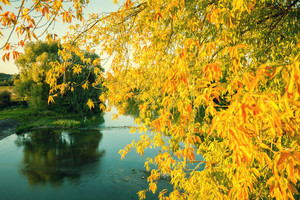 Autumn landscape with a lake. Branches with yellow leaves over the lake