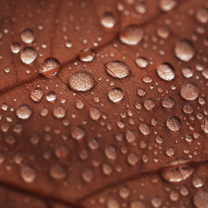 autumn leave and water drops background