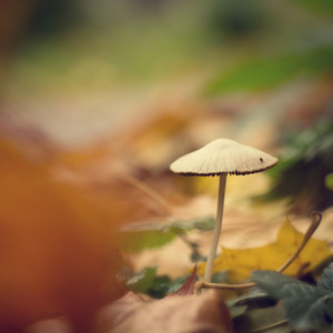 Autumn nature background. Mushroom