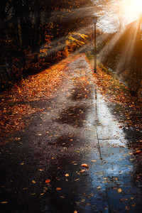Autumn sun rays sunbeam appear over sidewalk in a rainy day. Fallen golden leaves laying on the ground. Backlit light