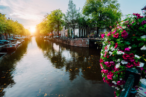 Autumn sunset on the streets and canals of Amsterdam. Befutiful flowers in front