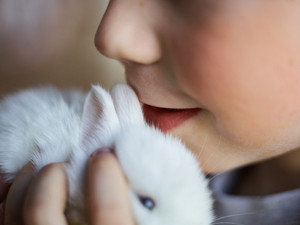 Baby-bunny close to child face