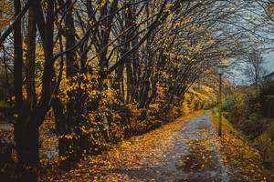 Beautiful alley in a park with lanterns. Leaf fall, autumn natural background