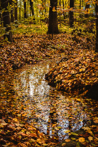 Beautiful colorful landscape with a stream and forest in autumn colors. Late autumn