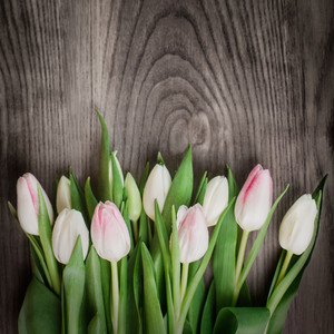 Beautiful composition from white tulips