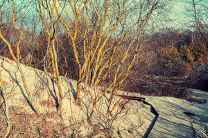 Beautiful nature. Sandy dune with trees in autumn