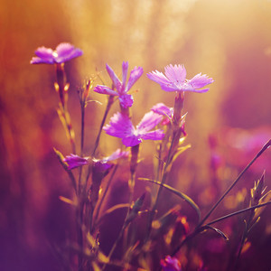 beautiful pink flowers in park in flowerbed in summer. Outdoor fresh photo
