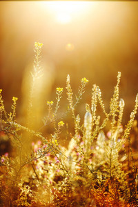 beautiful spring wild beadow plants in field. Outdoor nature photo in morning sunrise with yellow sunlight