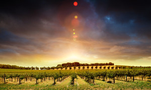 Beautiful sunset over an Australian winery