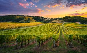 Beautiful Vineyard at Sunrise