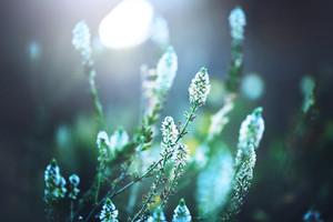 beautiful wild meadow flowers on nature dark background. Vintage outdoor photo