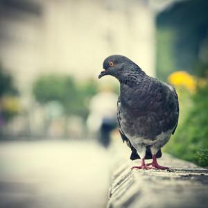 bird vintage background