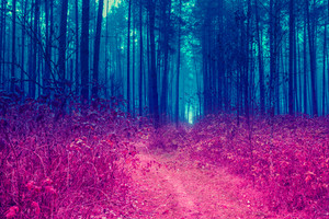 Blue red Vintage pine forest in evening. Gradient color
