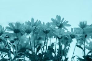 Blue vintage flower background