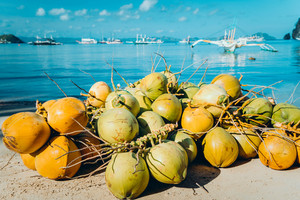 Branch of coconut fruits on the corong corong beach in El Nido, Palawan, Philippines