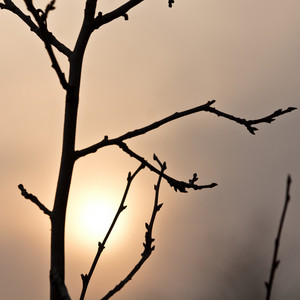Branches tree on sunset background. Nature