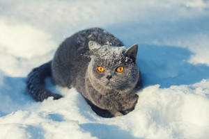 Cat covered with snow sitting in the deep snow