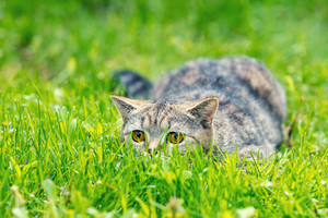 Cat hiding in the grass in the garden