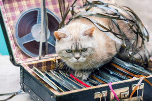 Cat lying on suitcase with old music tape reels