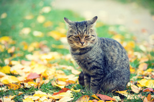 Cat sitting outdoors on the fallen leaves in autumn