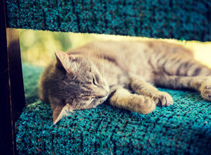 Cat sleeping serenely on a chair