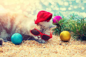 Cat wearing sunglasses and Santa hat lying on a beach near pine branch and a Christmas decoration.