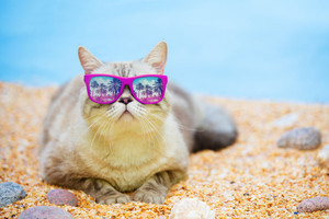 Cat wearing sunglasses relaxing on the beach