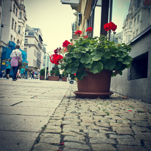 City flowers in street. Decoration
