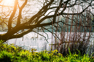 City park in spring time. Green grass growing near pond shore. Sun rays coming through tree branches