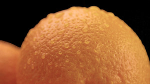 closeup of oranges on black background. Fresh with drops of water on peel. closeup of wet orange cut