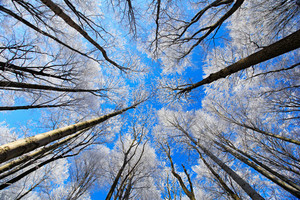 Cold day with rime. Winter landscape with rime treetop and dark blue sky. Snowy forest with ice on the tree trunk. Winter in Europe. Sunny sky with ice.