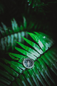 Compass laying on fern leaf in a vivid moody tropical jungle foliage. Adventure discovery travel navigation concept