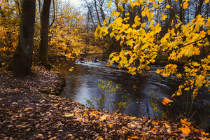 Couple paddling in kayak on forest river. Autumn forest lake surrounded by golden limbs and leaves in the autumn day