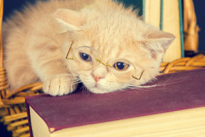 Cute business little kitten wearing glasses lying on a book