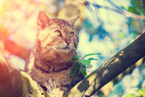 Cute cat lies on a branch of the tree in a garden in spring in blossoming orchard