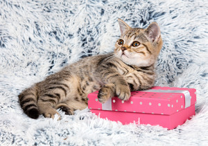 Cute kitten lying on a gift box