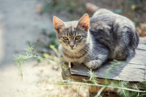 Cute kitten relaxing on the old grunge table in the garden