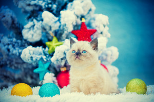Cute kitten sitting in snow near fir tree with Christmas decoration.