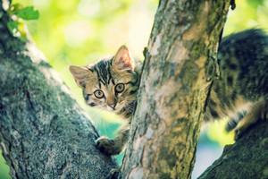 Cute little kitten climbing the tree in the garden