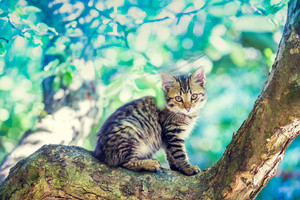 Cute little kitten sitting on the tree in the garden