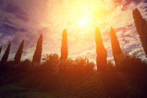 Cypress valley, sunset feeling, Tuscany, Italy