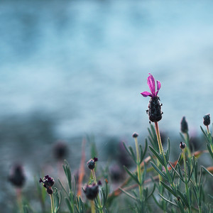 delicate pink flower on a background sea