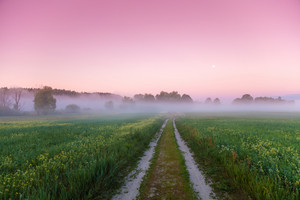 Dirt road in the field with blue sky at sunrise. Beautiful evening nature, rural landscape, springtime