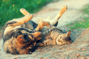 Dog and cat best friends playing together outdoor. Lying on the back together.