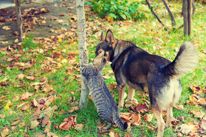 Dog and cat best friends walking together outdoor in a garden in autumn