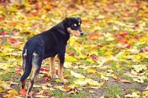Dog on the fallen leaves outdoor in autumn