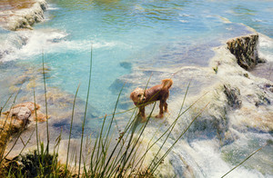 Dog swimming in Thermal springs, Italy
