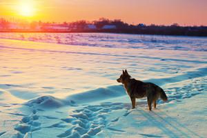 Dog walking in the snowy field in winter